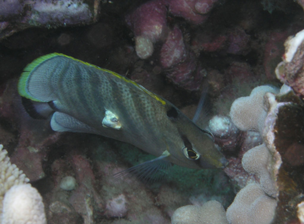 Fish and Other Diseases « Eyes of the Reef
