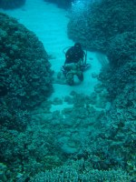 Large mats of cyanobacteria Leptolyngbya crosbyana accumulates in sand channel at Honaunau.