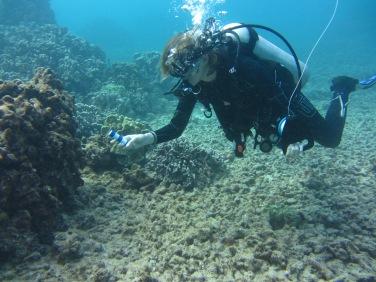 scuba diver swimming over a coral reef